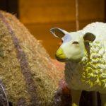 אירוע קונספט - כבשה