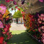 אירוע קונספט - דרך הפרחים הצבעוניים