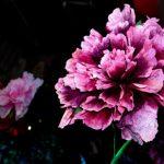 אירוע קונספט - תקריב של פרח סגול