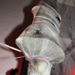 אירוע קונספט - עכביש